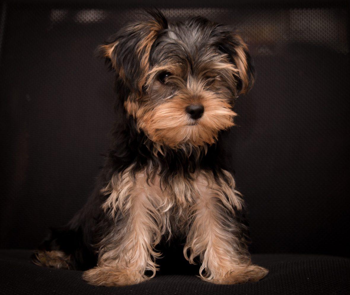 ¿Estás preparado para recibir a tu mascota en casa?