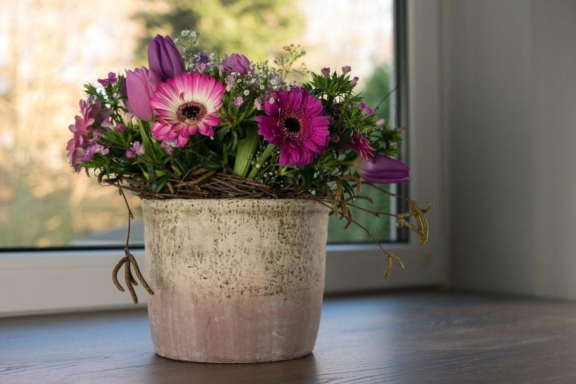 Conoce la magia de las plantas en tu hogar